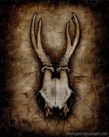 Deer Skull by Hrefngast