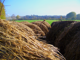 pick a bale of hay by mirbiggles