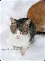 723 by evy-and-cats