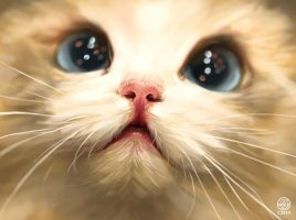 Cute cat study by CatherineSteuer