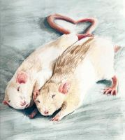 Two Ratties by flamekittie84