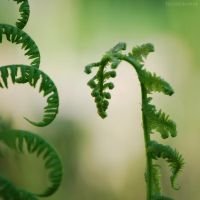 fern by FeenoGraphie