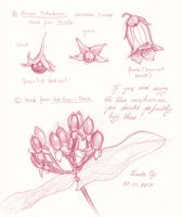 Berries - Sketches by LualaDy