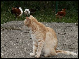 Dula is the guardian of chickens II by VesnaRa14