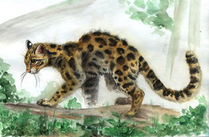 Ocelot by Ankhes-Nur