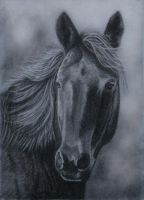 horse in charcoal by rasberry6