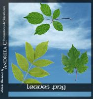 UNRESTRICTED - Leaves .PNG by frozenstocks