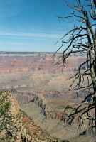 Trees in The Canyon by fake-sincerity