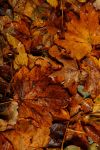 Leaves 001 by ISOStock