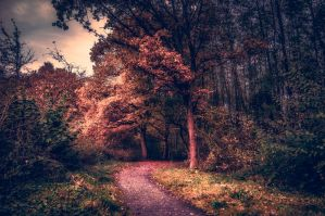 Autumn Path by 1darkstar1