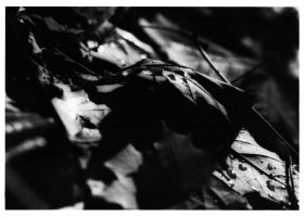 November - Leaves by Shmithers