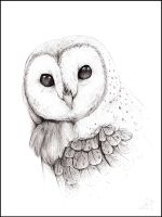 : Barn Owl : by The-F0X
