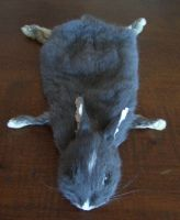 Bunny head soft mount commission #1 by DeerfishTaxidermy