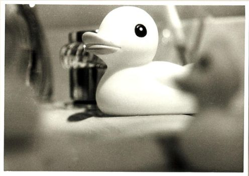Ducky Photography by Firefly21405