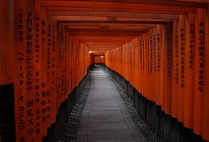 Among the Torii by Of-the-Mist