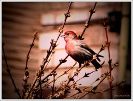 Spring.......birds.....6 by gintautegitte69