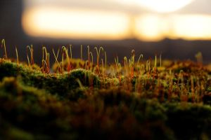 Tiny world in the setting Sun II. by TomZoy