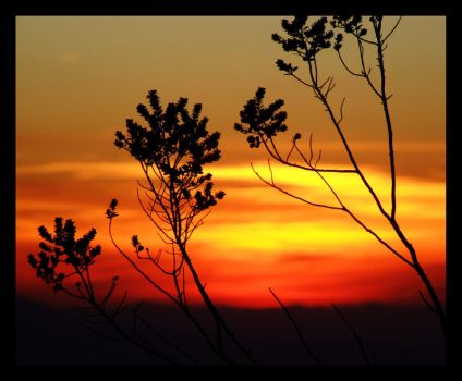 Sunset with plants by guilhermegn