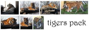 tiger pack by syccas-stock