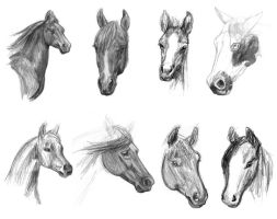 Horse Head Studies 1 by ChayaA