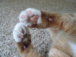 Pink Cat Paws by Geak-of-Nature