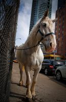 white horse in new york by Kitty-of-Troy