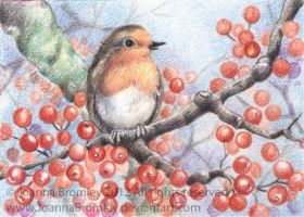 ACEO Robins Berry Perch  by JoannaBromley