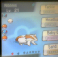 Nibbles Evolved by Rain-and-Thunder