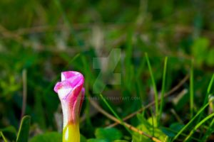 Pink Flower by ProfSmiles