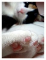 Kitty Paws by JacquiJax