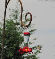 Humming Bird Picture-2 by JLAT1990