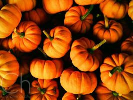 Baby Pumpkins by Champineography