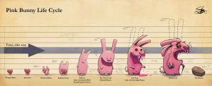 Pink Bunny Life Cycle by Cado