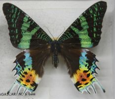 Stock : Multi Color Butterfly by Deaths-stock