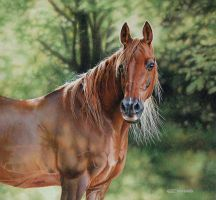 Arabian Horse by EsthervanHulsen