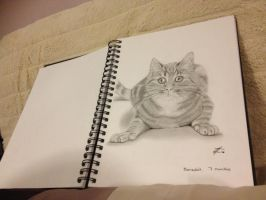 Cat Sketch by 4lisx