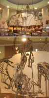 The Velociraptor Fossils by sculptor101