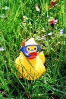 Duckie's Escape by woodfaery