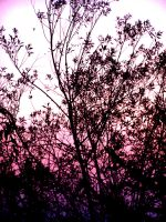Pink And Violet Sky by Welody