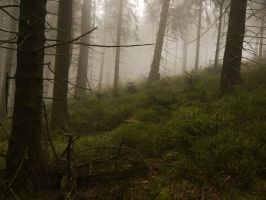 A morning in Lothlorien 48 by Dragoroth-stock