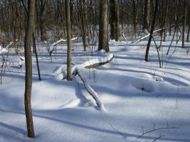 649 - more snow by WolfC-Stock