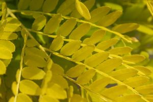 Yellow Leafes by wuestenbrand