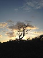 Tree on Sunset. by The-Great-Luigi