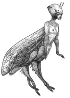 insect by spligity