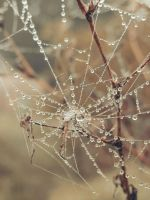 Cobweb by ViciousCircle-7