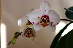 Spotted Orchid by Nat-photography