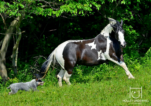 When dogs and horses play by ThunderhillPaints