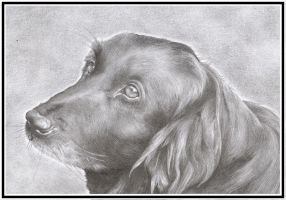 My dog Max by WiccanSoul