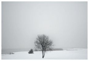 Snow by Gustavs