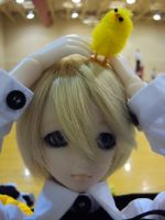 .BJD - Fai loves Gilbird by KittyKatMage